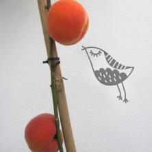 Plantinova8.jpg